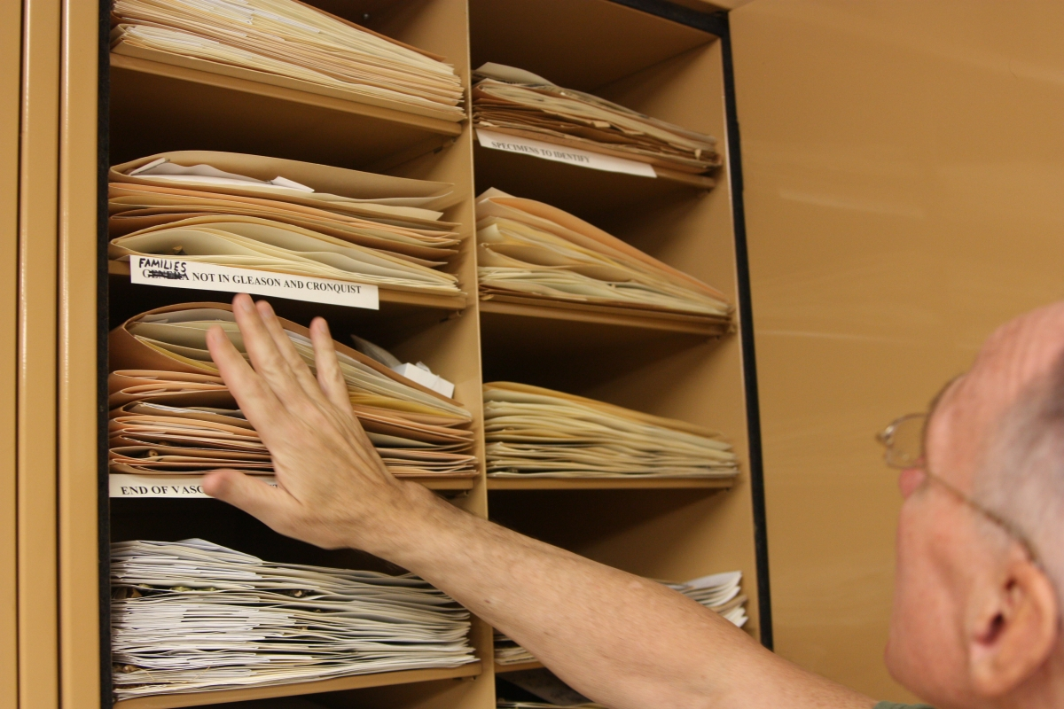 Files in the herbarium