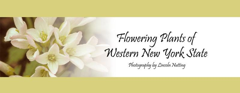 Flowering Plants of WNY