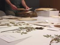 The Eckert Herbarium